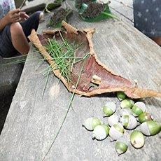 落ち葉や木の実拾い